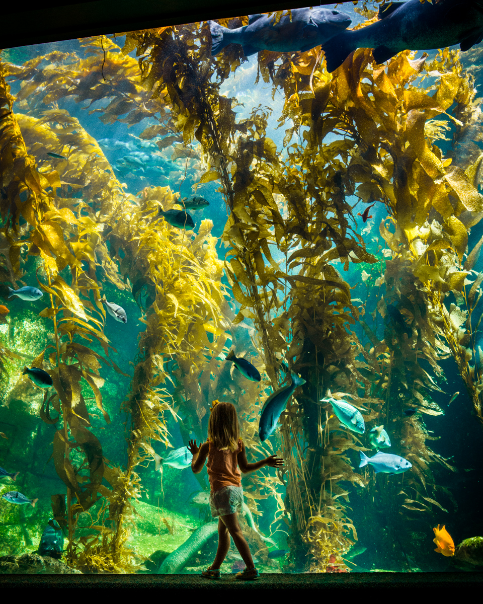 Birch Aquarium for Visit California